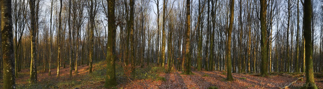 Image of Mullaghmeen Forest
